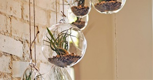 13 Brilliant Ideas For Decorating Your Walls With Air Plants