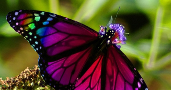 20 Colorful Animals That Will Make Your Jaw Drop