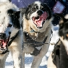2014 Iditarod Trail Dog Sled Race