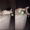 Dog fell asleep like this. #9gag