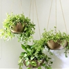 Liven Up Your Living Room With DIY Hanging Planters