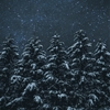Snow & Stars - a composite of two images, stars and pine...