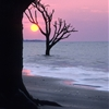 Sunrise, Boneyard Beach, Botany Bay Plantation, Edisto Island,...