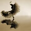 dancing hedgehog by bvclairv (bvclairv.tumblr.com)