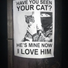 Have You Seen Your Cat?