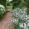 Trending on Gardenista: White Gardens