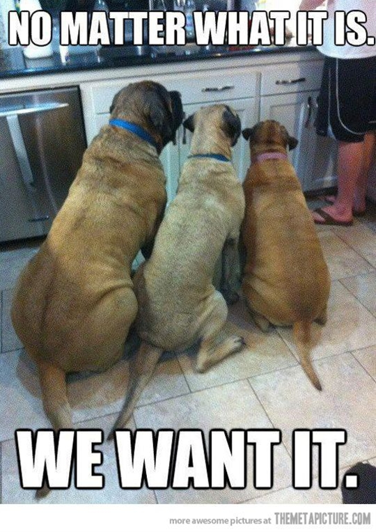 How about you toss us that greasy napkin you just used to wipe off the stove? - My dogs
