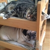 Can a dog and a cat be bunk bed mates? Seems so!