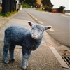 janluzar:  Blue sheep