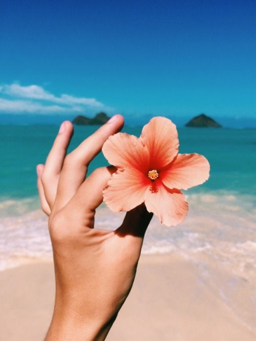 Tropical hibiscus & beach - two of my favs