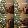 It's that time of year again for us dog owners. #9gag