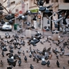 Pigeons in Paris - 6 a.m. by journeywithmycamera.tumblr.com