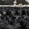 Radioactive Fukushima