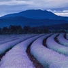 Lavender Fields Photograph by Gerd Ludwig Purple tints land and sky as night falls over lavender fields at Tasmania's famed Bridestowe Estate. The plantation is one of the largest lavender farms in...