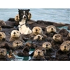 One of them is not like the otters. #9gag
