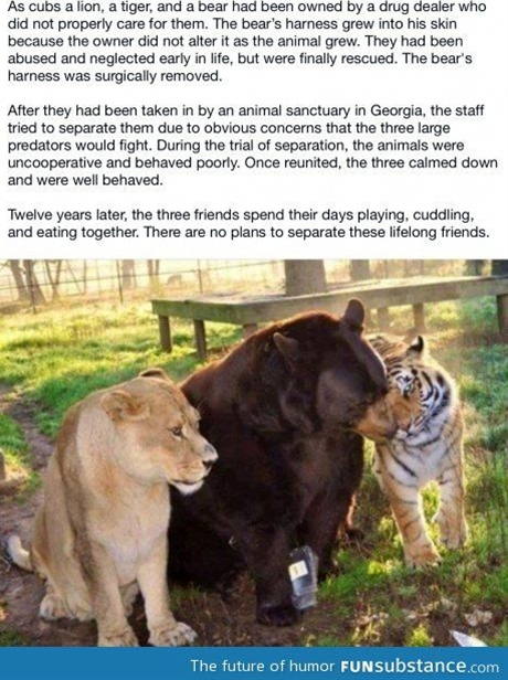 Cute but sad... People should not be able to have animals especially exotic/endangered if they are not going to care for them