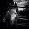 Foal (at Holly Springs, MS) by Megan Wolfe ...