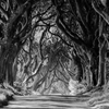 "The Dark Hedges""A bruise is a lesson… and each lesson..."