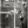 Time for spring cleaning by hjl1/125, f/2.8, TMax 100, Canon FD...
