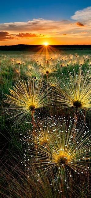 Sunset in Chapada dos Veadeiros National Park, Brazil
