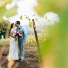 California Winery Wedding with Fuchsia Accents
