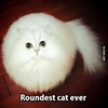 Looks like a ball with eyes 😍 #9gag