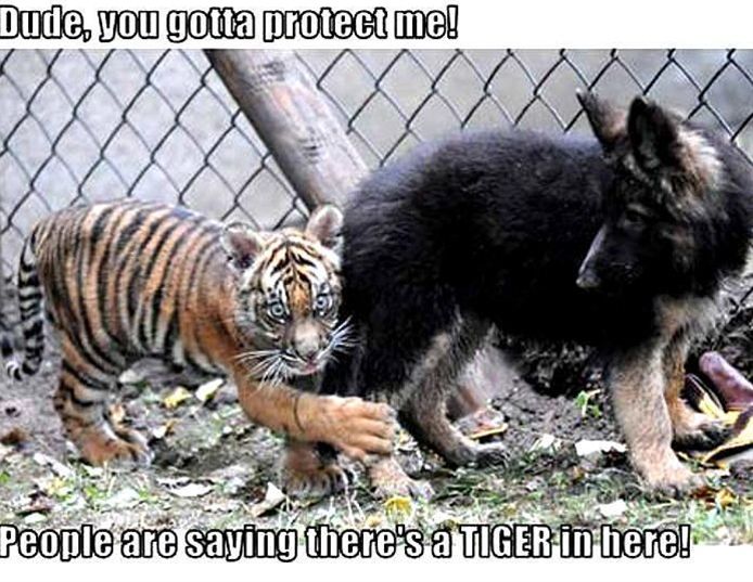 funny dog & tiger