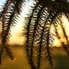 Let the Sun ShineStole a kiss through your golden locks…Silver...