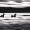 Horses in Abstract, DiptychI was out taking long exposure...