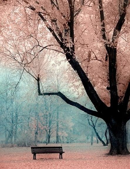 pink tree....
