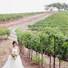 Romantic Blushing Affair in Wine Country