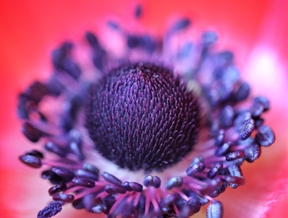 the heart of a flowerby Andi Gebhardt by...