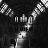 Natural History Museum, London 16/07/14 by Saskia Kovandzich ...