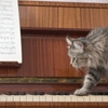 """Music just for cats exists, and they """"like it."""""""