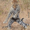 He's got the move like jaguar. #9gag