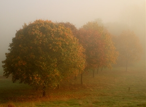 A battle going on between the fog and the sun by...