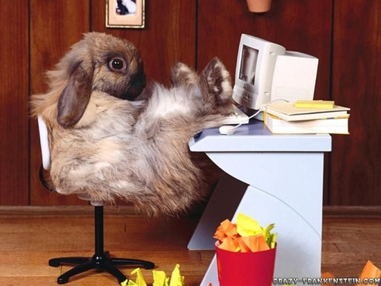 Funny Animals: Funny Rabit