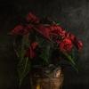 10 · MONOTIPSMONOTIPOSMONOTYPINGExercici amb flor de nadal ·...