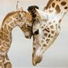 Mother's love by Jan Pelcman