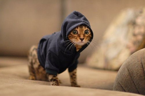 You can call them Hipster Cats, Cowl Kittens or Zuckerpussies—just so long as you call them adorable.