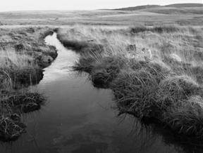 Gallaven Brook, Scorhill by stephenearp...