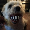 Got the dog a new ball. #9gag