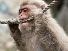 Monkey Business!Nagano - Japan 2014 by Christopher Lang...
