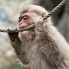 Monkey Business!Nagano - Japan 2014 by Christopher Lang ...