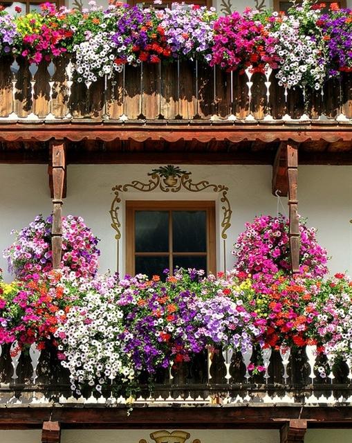 flowers n flowers, this is what called Italian gardening