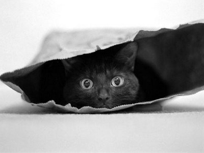 cats not out of the bag yet