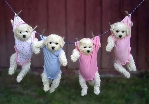 Laundry:)