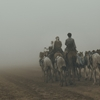 camels .. fog by Saeed
