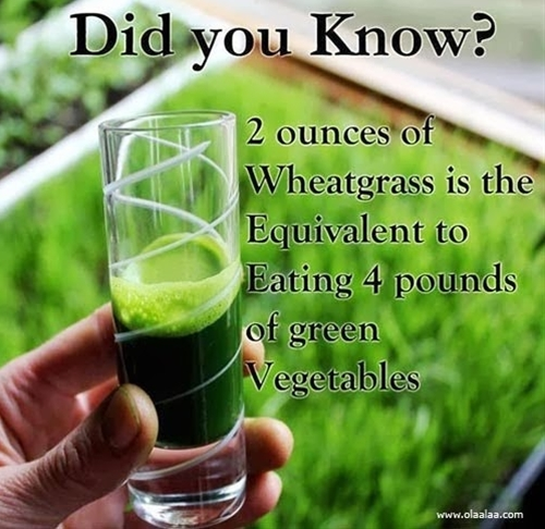 2 ounces of wheat grass is the equivalent to eating 4 pounds of green vegetables