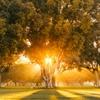 California lighttumblr | instagram by Ravi Vora...